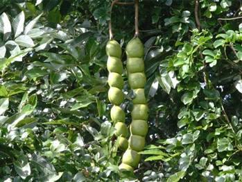 قرص گیاهی کمک به رفع کمر درد 100 گرم